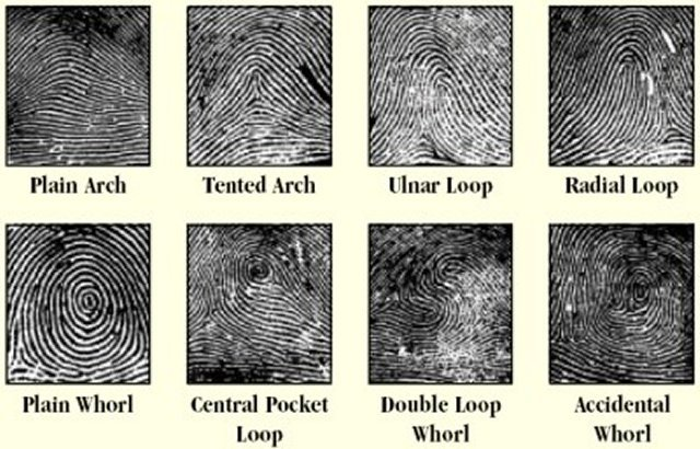 biometrics fingerprint identification. Black Bedroom Furniture Sets. Home Design Ideas